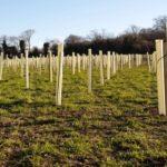 treeplantingwebsite